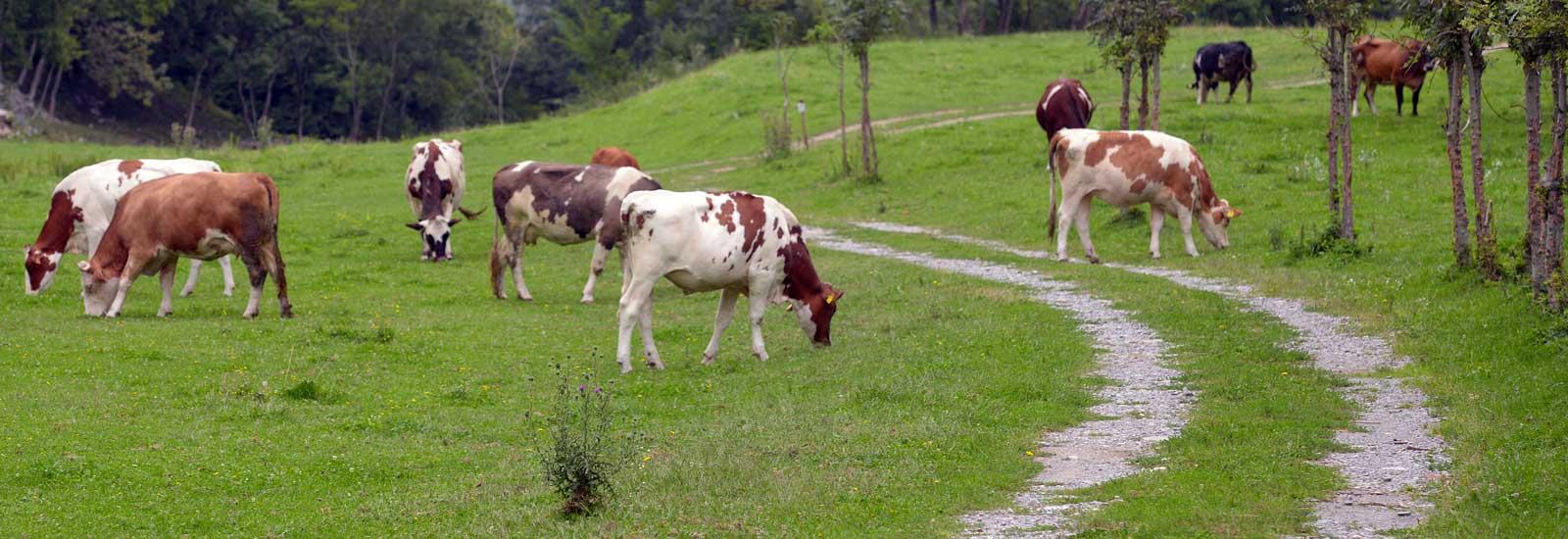 Alpe di megna azienda agricola formaggi Lecco Como